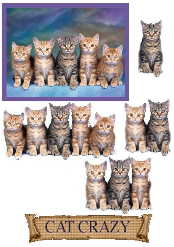 3D cat crazy