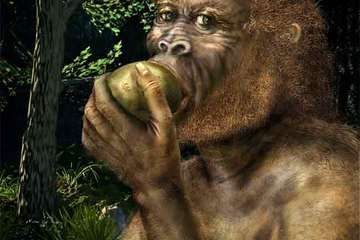 Top 10 Mysteries of the First Humans | Human Origins | Ardi, Hobbits & Neanderthals | LiveScience