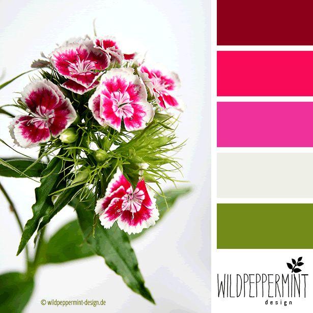 #Farbpalette, #Farbinspiration, Bartnelke, Rottöne, / © wildpeppermint-design.de