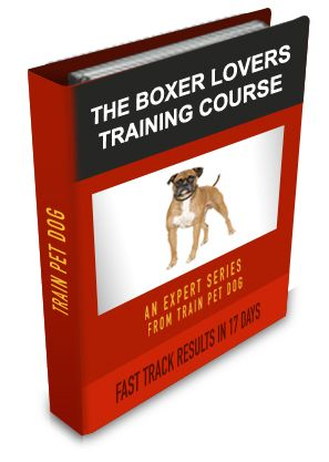 Boxer Training: Learn All About Training Boxers & Taking Care of Them