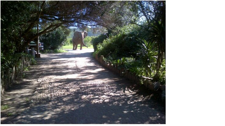 An elephant seen at the back of River Camp main lodge!