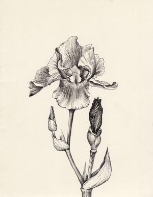 You Gotta See These Amazingly Realistic Iris Flower Tattoo Ideas