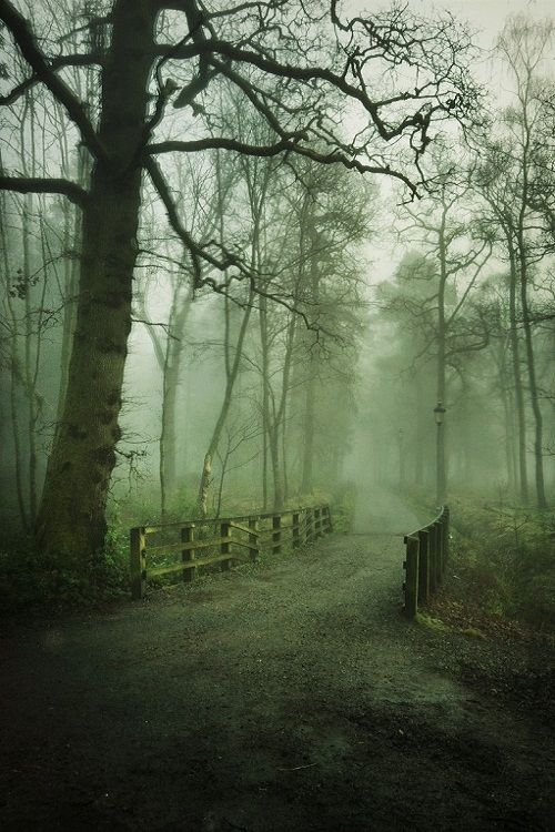 Balloch Park, Argyll and Bute, Scotland. (by Mark Harris)