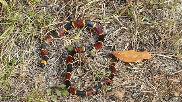 ARC #2 Colorful Snakes: Appreciation Can Enhance Conservation