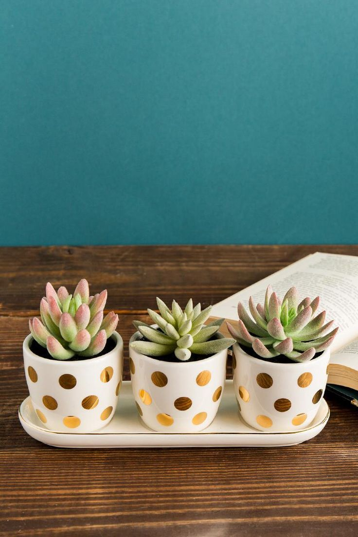 Gold Dot Faux Succulent Set Cute Office Decor Bathroom Themes Succulent Theme