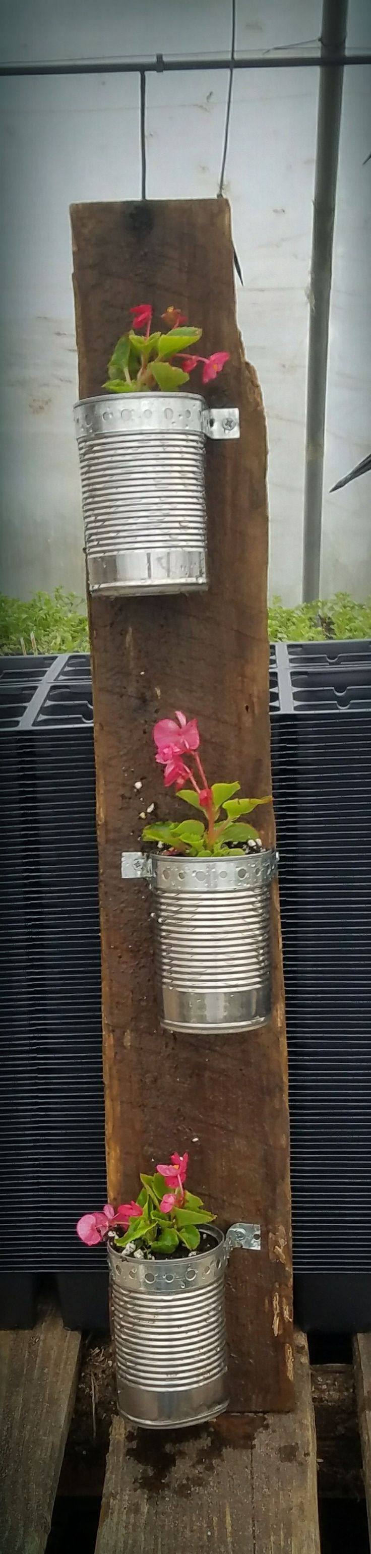 Wood plank planter Super easy and adorable. Items: Wood plank, Aluminum cans, Screws, Perforated Galvanized Steel Duct Strap, drill. Drill some holes in cans to allow water to flow.