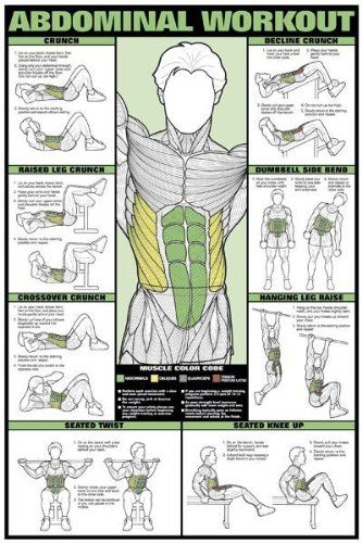 """Triceps Workout 24"""" X 36"""" Laminated Chart http://www.mysharedpage.com/abdominal-workout-24-x-36-laminated-chart"""