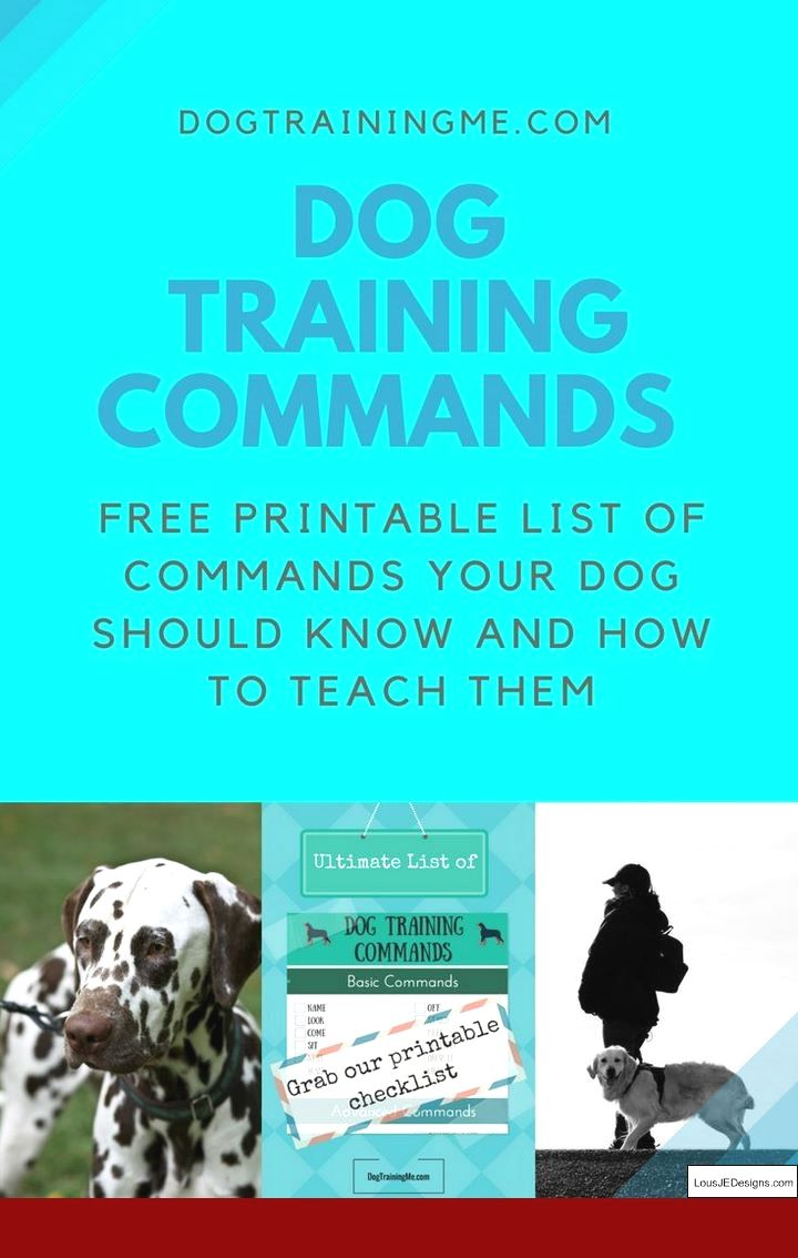 Best Ways To Train Your Dog Not To Bark And Pics Of Tips For
