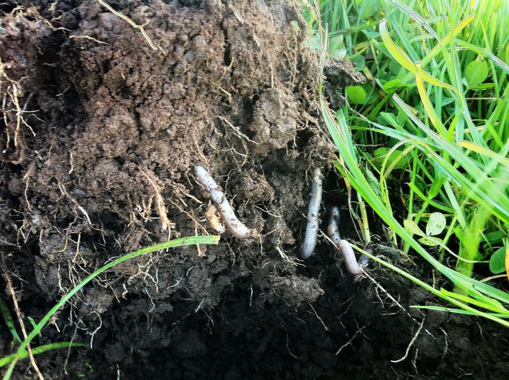 Soil health underpins everything. Bring biological diversity back into your soil. www.petriksoiltech.com.au Tel: 1800 229 994
