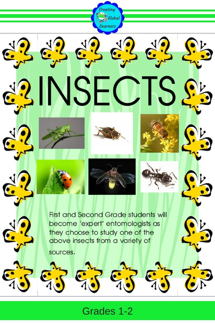 Insects - An Independent Study | Teaching Ideas | Science