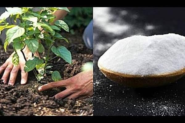 10 eszméletlen kerti praktika szódabikarbónával