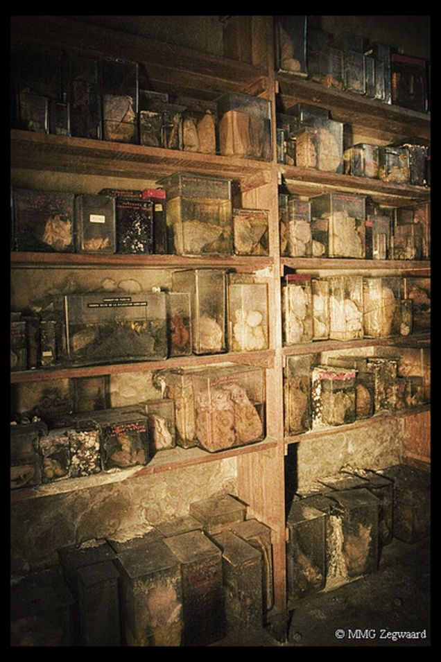 "It's called the ""Horror Labs"" and it's easy to see why. L'école de médecine vétérinaire, a former veterinary school in Brussels, Belgium, still houses its teaching tools. Jars stuffed with organs and animal bodies line the walls, setting off the building's more mundane decay."