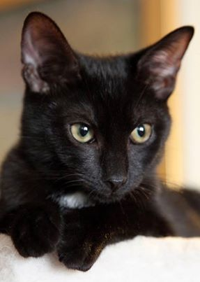 what can I say black cats melt my heart.