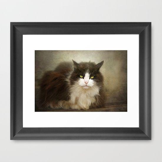 Cat+Framed+Art+Print+by+Pauline+Fowler+(+Polly470+)+-+$35.00