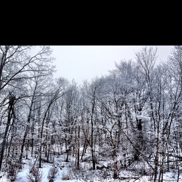 My Minnesota backyard on a foggy winter day. The trees look covered in snowy lace. :)