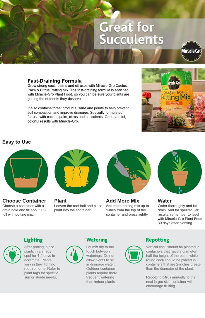 Miracle Gro Cactus Palm And Citrus Potting Mix 72078500 The Home Depot