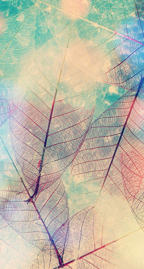 Imagem de leaves and wallpaper