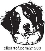 Clipart Illustration Of A Curious Bernese Mountain Dog Tilting His Head On A White Background