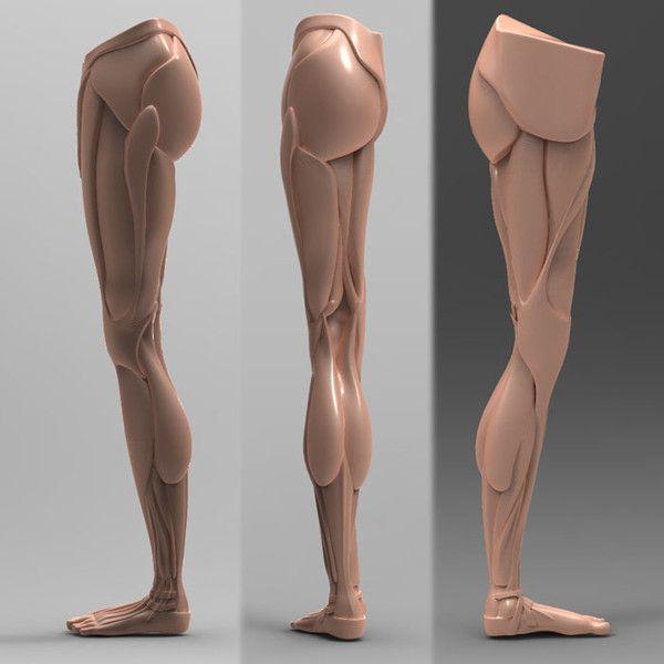 SculptUniversity.com & MakingFairies.com Reference Photos for sculptors already organized into body sections.