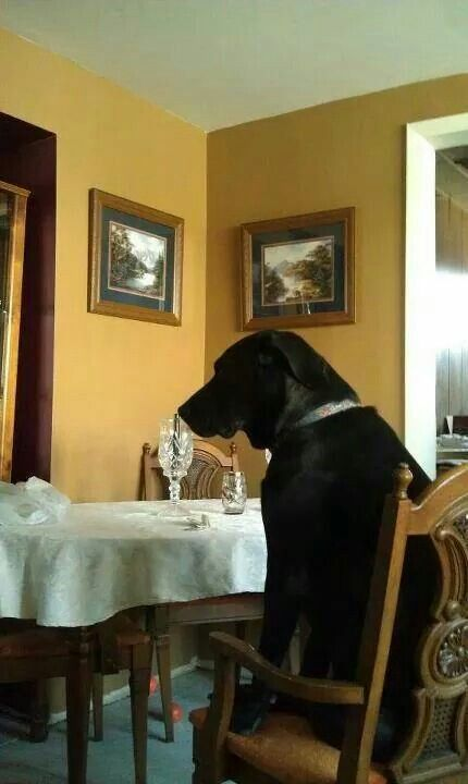 Patiently waiting for his plate...