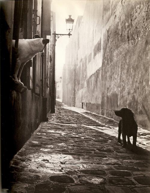 Chiens du Passage Ganneron, Paris 1951. Photo by Izis Bidermanas.