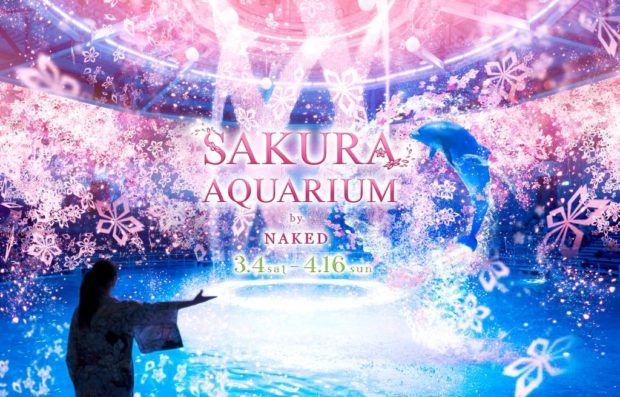 sakura-aqua