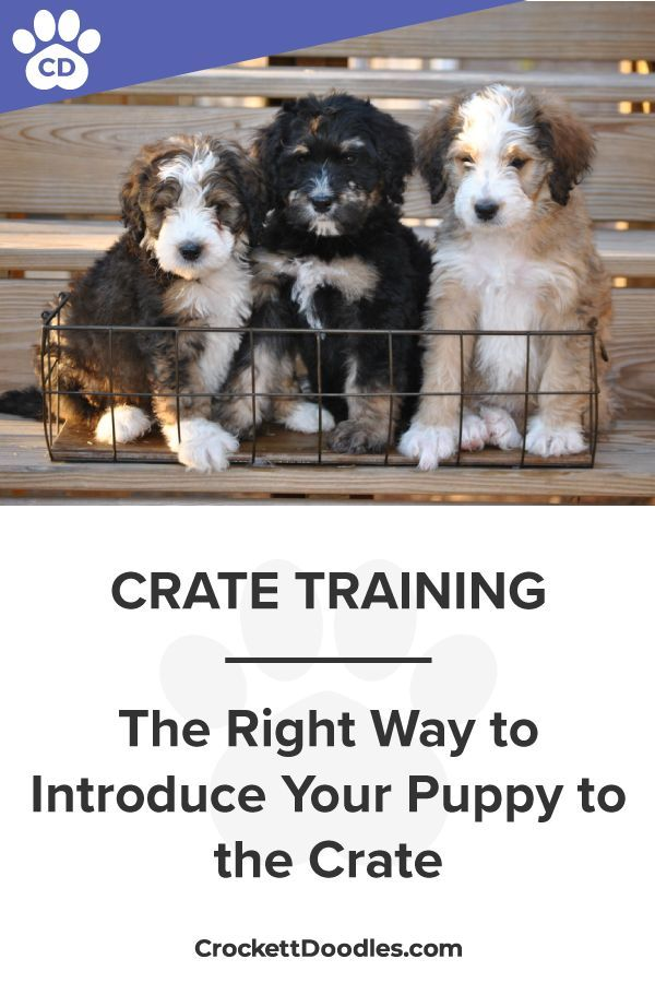 Crate Training How To Properly Introduce Your Puppy So It Becomes