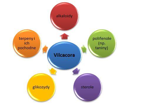 Vilcacora właściwości | www.herbatkowo.com.pl O vilcacorze pisano już dużo. Jako właściciel sklepu internetowego, w którym ją można kupić, sam od czasu do czasu piję ją po kilka dni z rzędu i potwierdzam, ze jej działanie naprawdę sprzyja zdrowiu. Polecam zwłaszcza w okresie osłabienia i podczas przesileń wczesnowiosennych oraz przedzimowych.