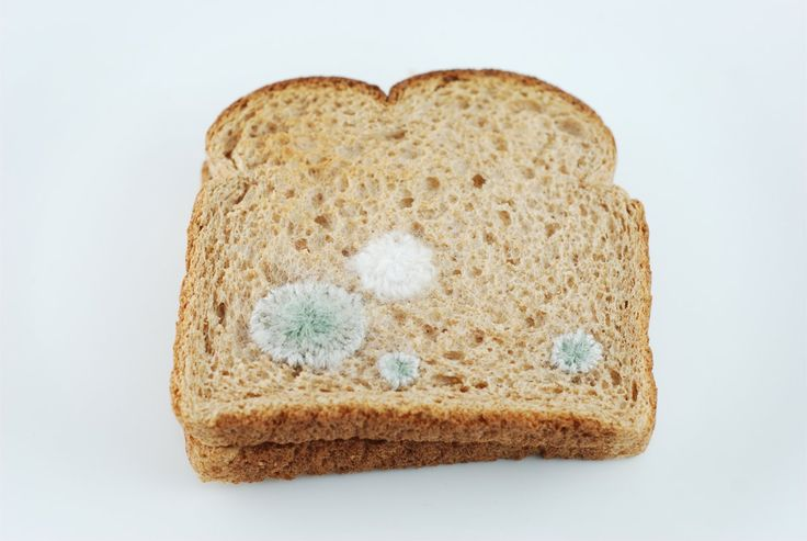 Judith Klausner, 'Toast Embroidery #3: Mold 1' 2010, toast, thread, paper (structural)