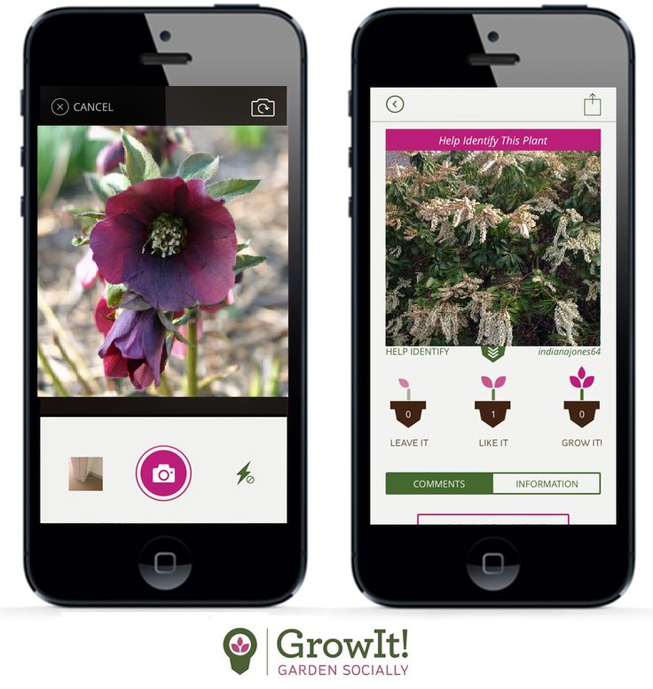 Need Help Identifying Your Plants? Get your Plants Identified on GrowIt! the FREE new social gardening app. If you notice there aren't many pictures in your area, break the ice and start uploading your favorite plants, and let people know what you think about them.