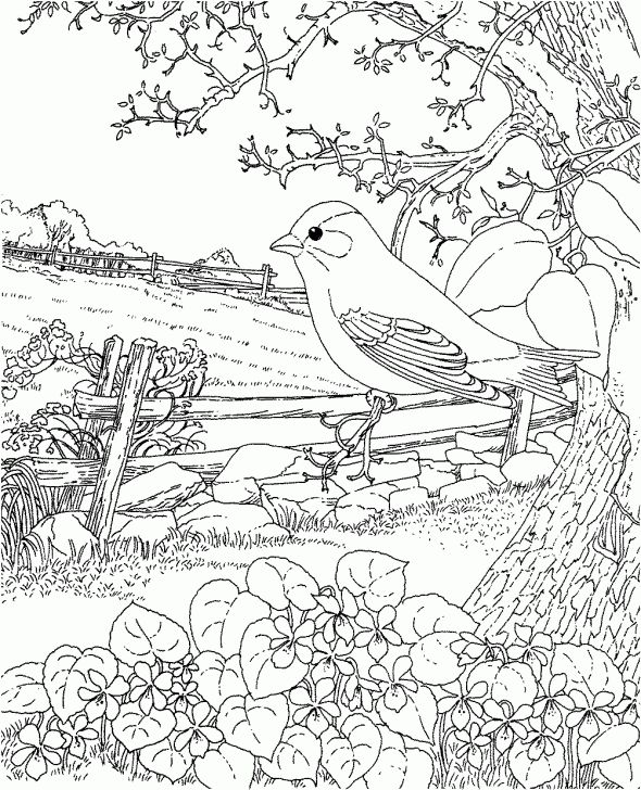 easter goldfinch new jersey state bird coloring page visit coloropoliscom for more adult