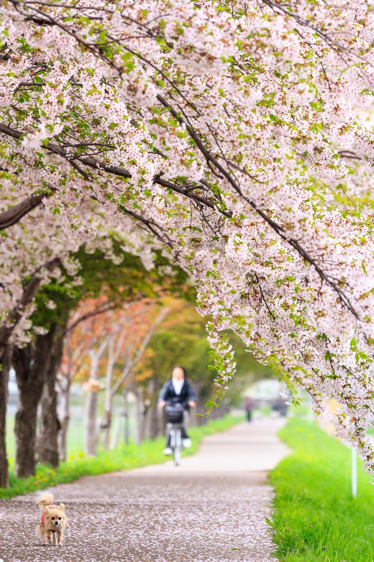 Promenade, Sapporo, Hokkaido, Sapporo, Japan