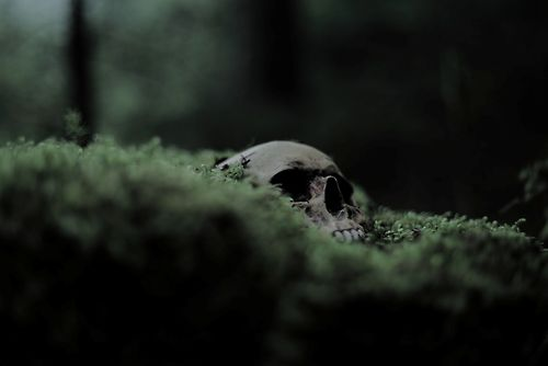This skull laying in the grass reminds me of Yorrick's skull and Hamlet's remarks about death in that scene. The lone skull in the grass represents the loneliness of death and leads Hamlet to accept his eventual death.