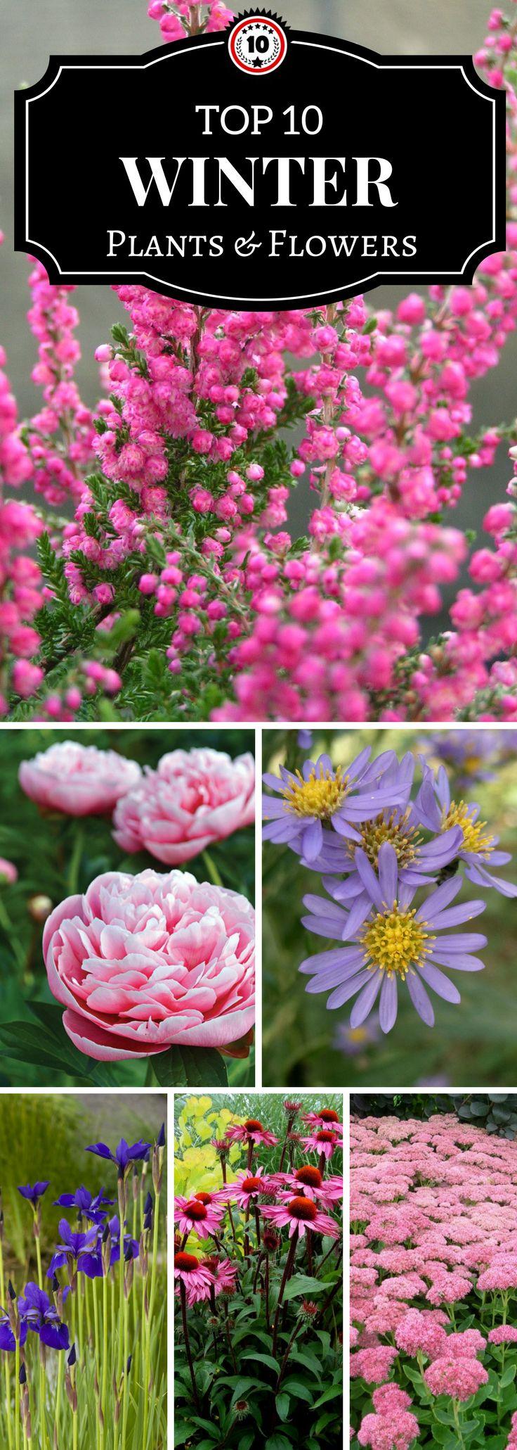 2129 best flowers u0026 plants images on pinterest flowers flower