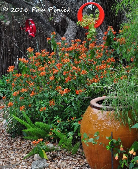 Find This Pin And More On Arizona Gardening U0026 Landscaping.