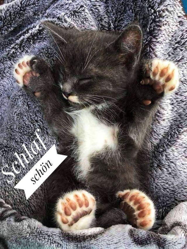 Pin von Kati auf Gute Nacht | Flauschige katze, Lustige
