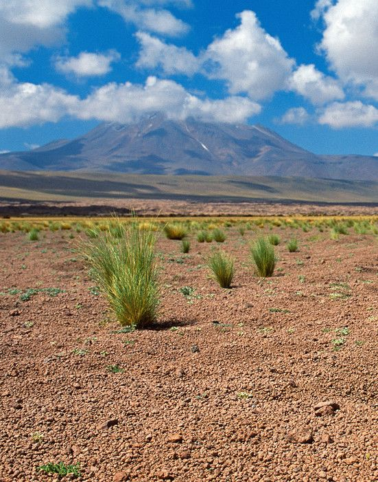 Ken Jennings uncovers a Chilean desert where rainfall is nearly non-existent—and yet plant life is thriving.
