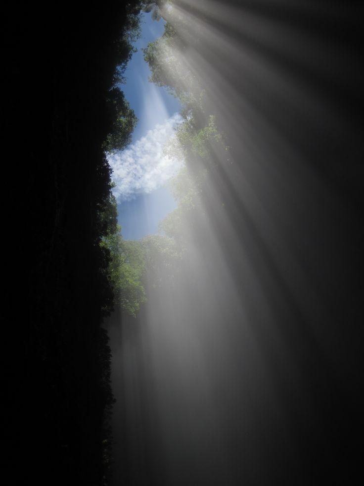 Lost World www.waitomo.co.nz