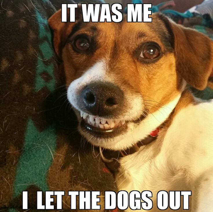 Dog Quotes, Too Funny, So Funny
