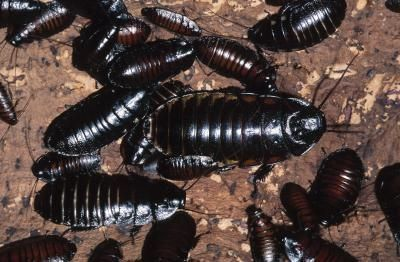 How to Kill Roaches Naturally With Bay LeavesCockroaches Totems, Kill Cockroaches, Totems Photos, Pest Control, Cleaning Ideas, Bays Leaves, Kill Roach Nature, Essential Oils, Animal Totems