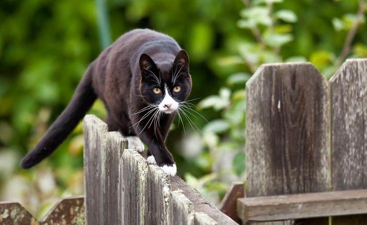 Sie kennen keine Grenzen und streifen gerne durch die Nachbargärten. Kann der Freigang von Katzen verboten werden? So urteilten die Gerichte.