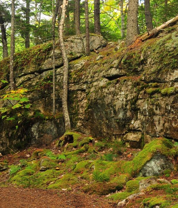 Ledges Along Huckleberry Trail-Coastal Maine Botanical Gardens