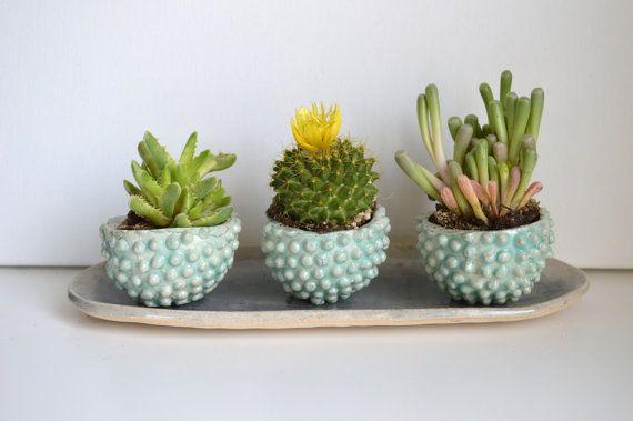 J A D E & S T O N E: ensemble de planteur de succulentes par mbundy