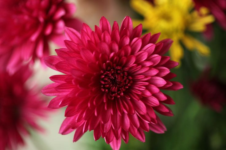 Lovely flower!  On my post on English words that start with L