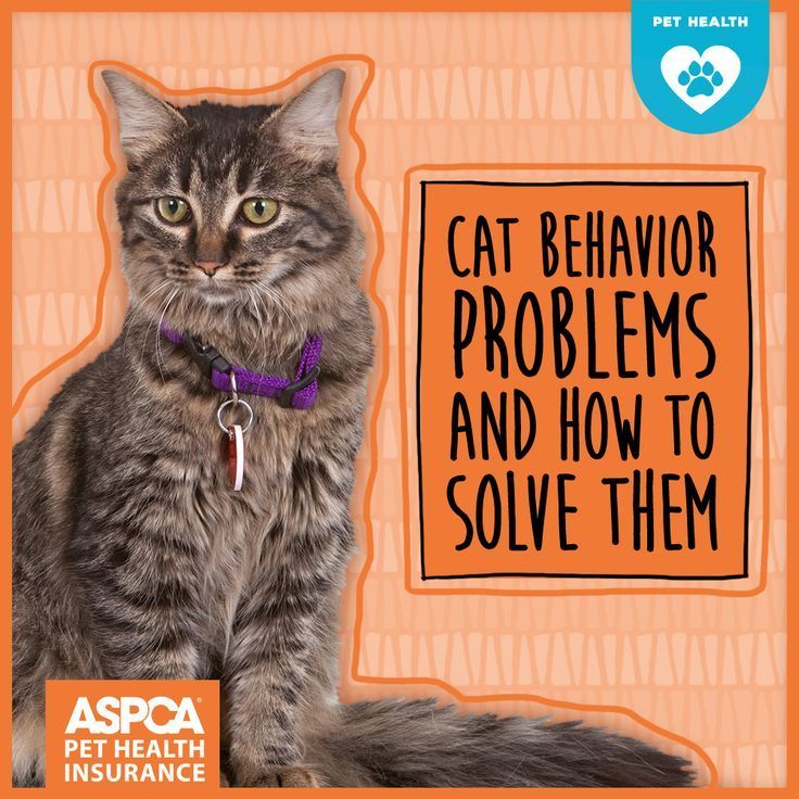 Is your cat doing something that is driving you batty, like clawing the furniture or meowing constantly? These tips can help you address five of the most common cat behavior problems.