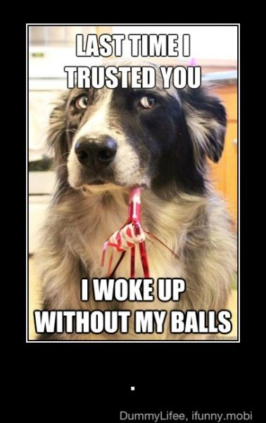 HahaLaugh, Funny Dogs, The Face, Funny Pictures, Pets, Dogs Photos, Dogs Humor, Funnydogs, Funny Animal