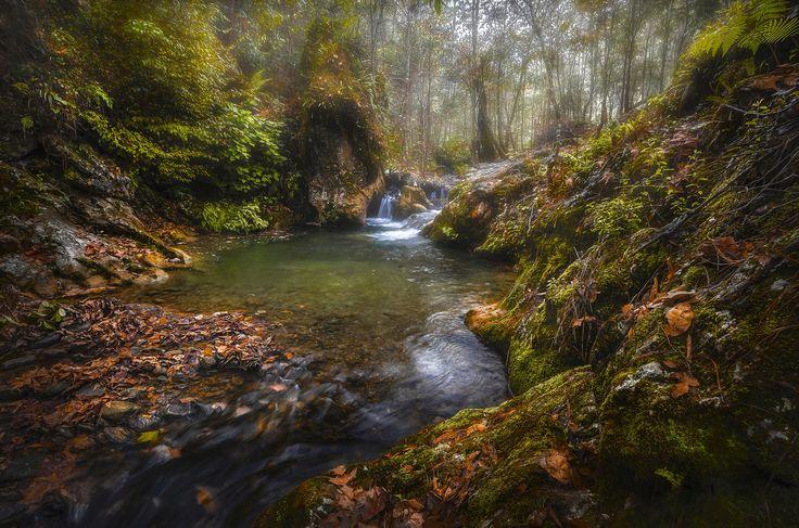 Sierra Negra Highlands Forest Creek - Sierra Negra Highlands Forest Creek, Sierra Negra de Puebla, México.