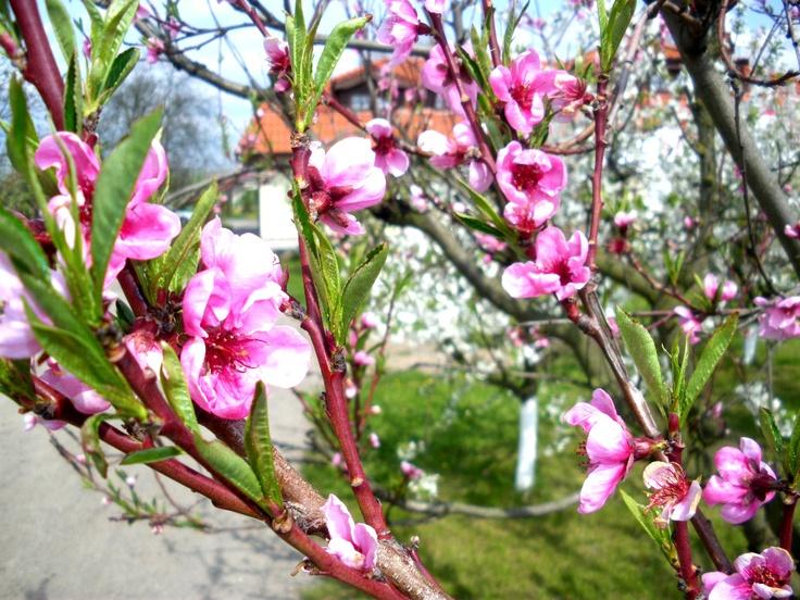 wiosną
