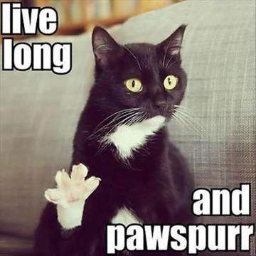 Live Long And Pawspurr - Funny Happy Birthday Meme