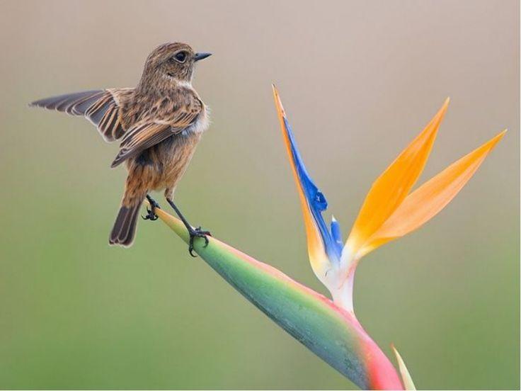 редкие птицы: 13 тыс изображений найдено в Яндекс.Картинках